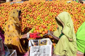 Women labourers busy packing tomatoes in the wooden boxes at a vegetable market