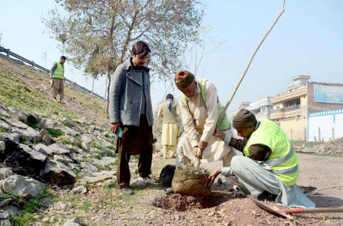 PDA workers are busy in planting a jacaranda plants at Motorway Jangle