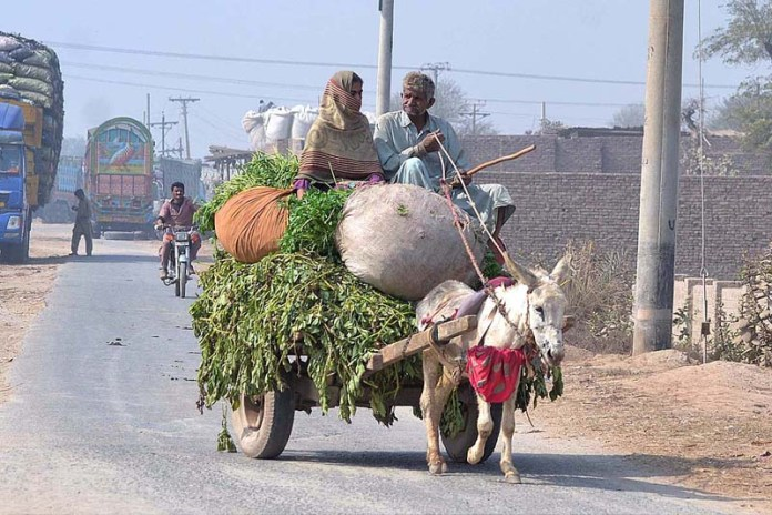 Farmer family traveling on the Donkey cart loaded with fodder for animal after cutting from field