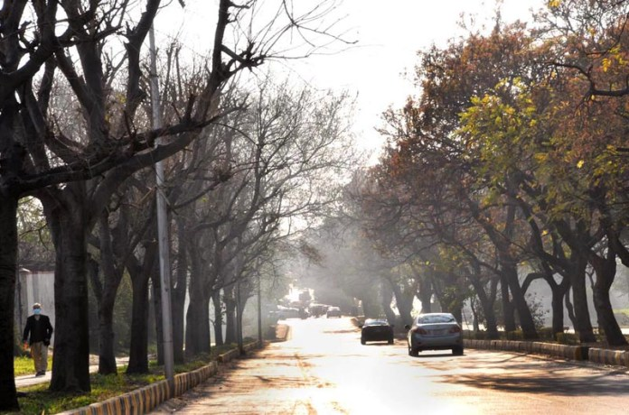 A view of leafless trees along road during autumn season