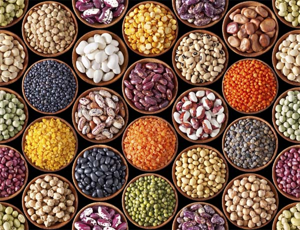 Pulses seeds for 36,280 acares distributed under productivity enhancement of pulses program