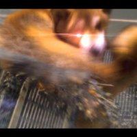 柴犬玩耍照被誤認成肌肉獸人,外型酷似《L4D2》殭屍Charger
