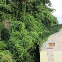 When Stephen King Turned into a Plant -The Old Villain Kudzu