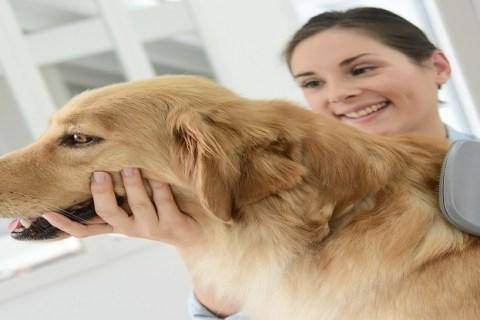on demand pet care