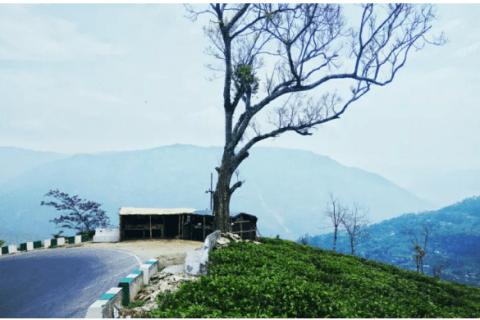 Cafes In Darjeeling