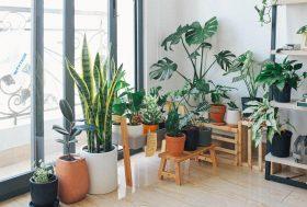 Different Interior Design Styles with Indoor Plants