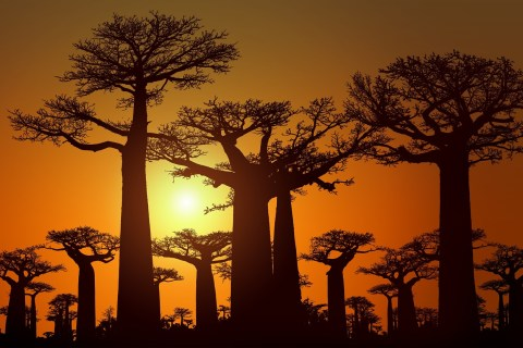 sunset baobab alley