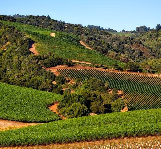 Wine Tours around