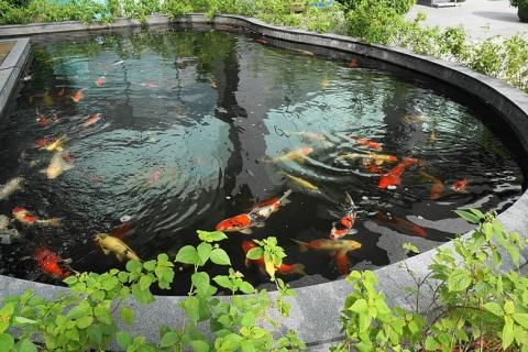 best pond filters