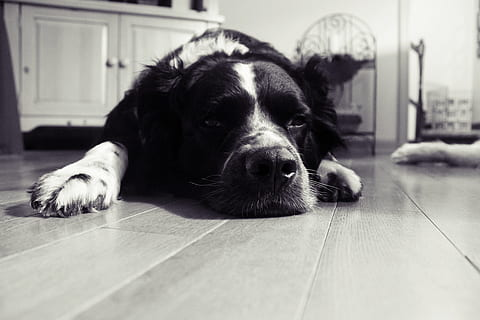 causes of dog's stress