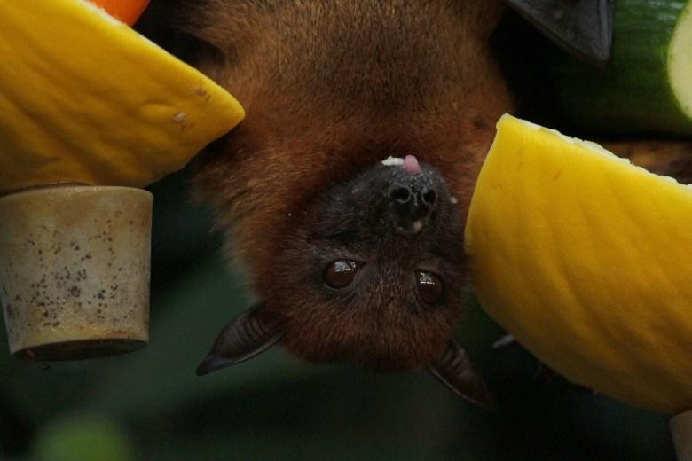 controlling bats