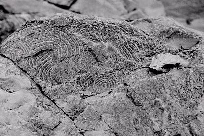 Rocce e fossili in valle Staffora Dove comincia lAppennino