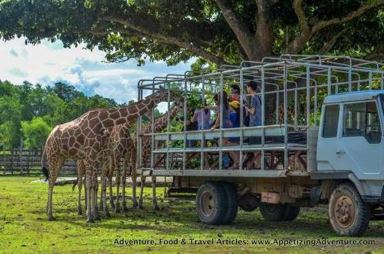 Calauit Safari Busuanga Coron Palawan -039
