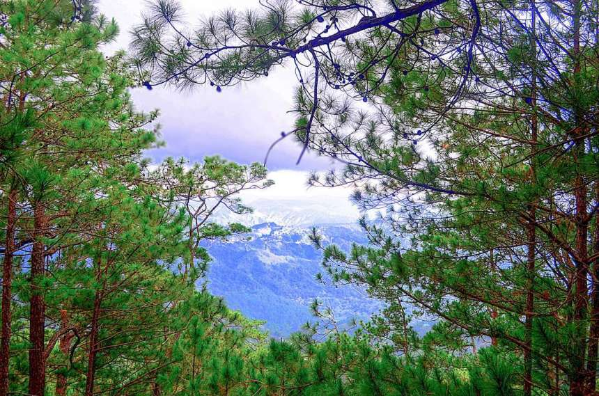 tree-top-adventure-baguio-view-002