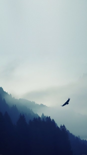 bird-flying-over-foggy-forest-iphone-6-plus-hd-wallpaper