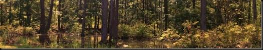 Swamp_Panorama1