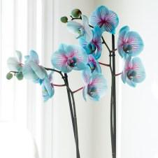 Imagini pentru blue pink orchid