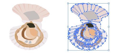 ホタテ 貝の開いてるバージョン イラレベクトルデータ無料配布