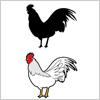 白い鶏のイラストと影絵素材
