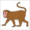 猿(さる)のイラスト