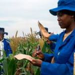 Agricultural Jobs in Nigeria | Procurement Jobs in Nigeria