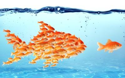 #6 Comment développer son leadership