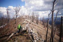 Cimetière d'arbres, Via Dinarica, Slovénie