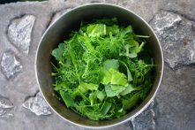 Salade sauvage au fenouil
