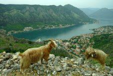 Vue sur la baie de Kotor