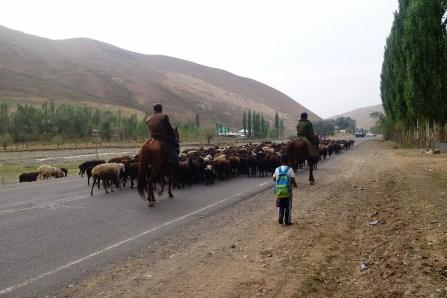 Retour des troupeaux