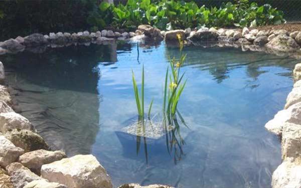 creation de bassin aquatique emmanuel