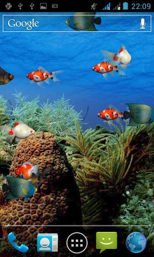 3d Aquarium Live Wallpaper For Android Live Aquarium Screensaver For Android Free Download