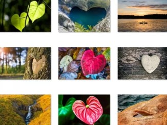 hearts in nature windows 10 theme