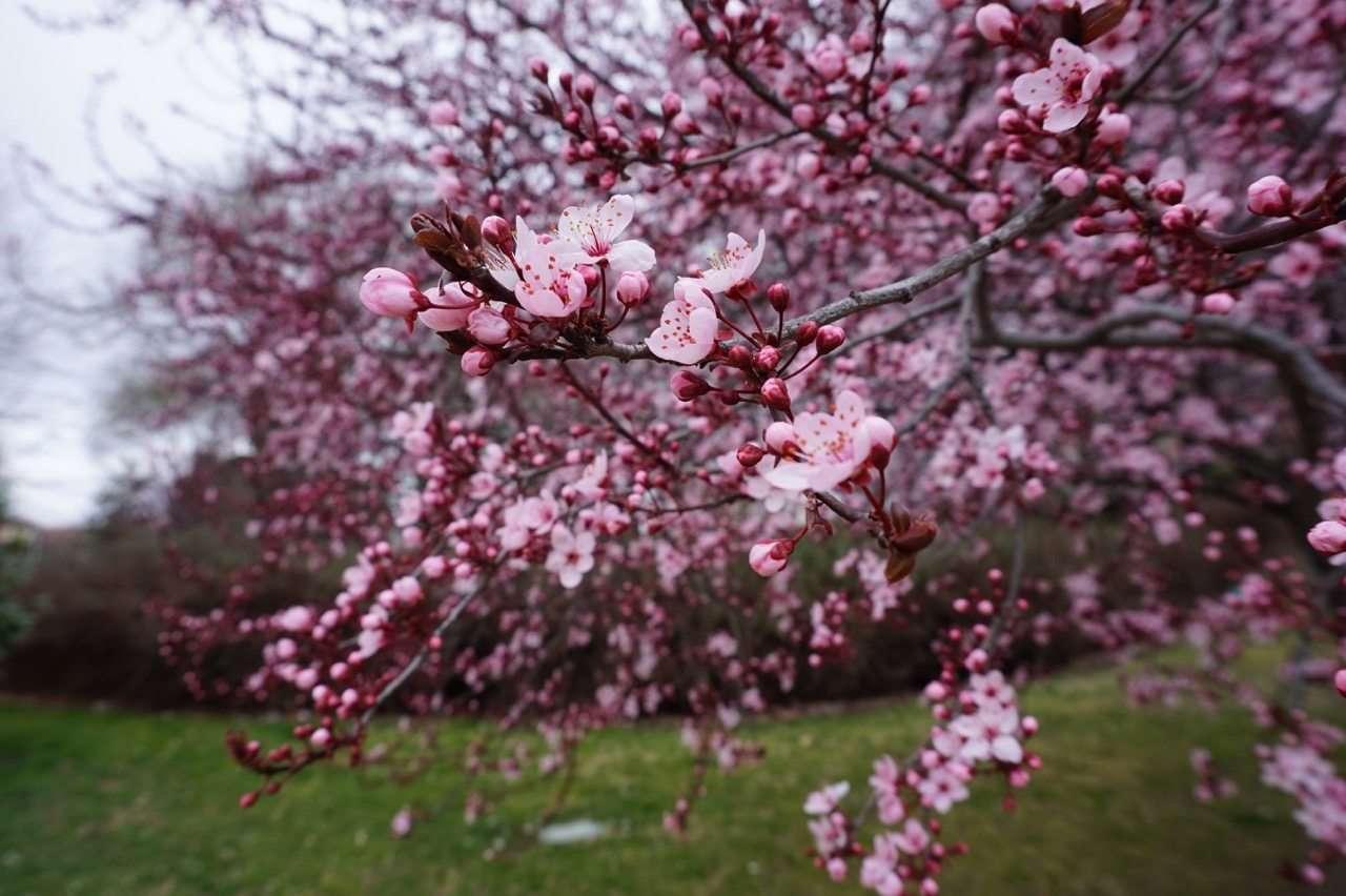 expresiones para hablar de la primavera en inglés