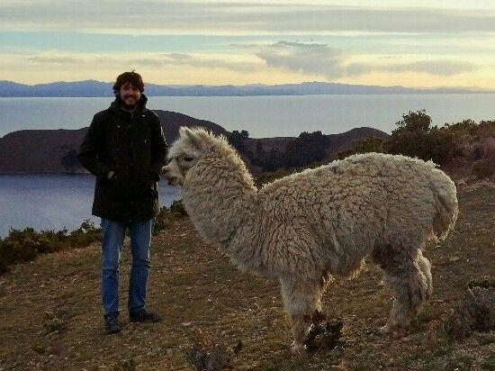llama o alpaca