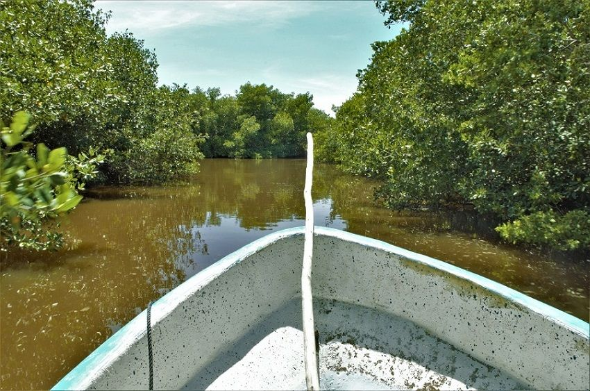 7 que hacer lugares turismo riviera maya Manglar Dzilam