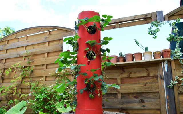 DIY tour de fraisiers