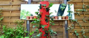 Réaliser une tour de fraises / DIY