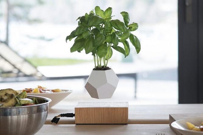 Lyfe - plante en lévitation