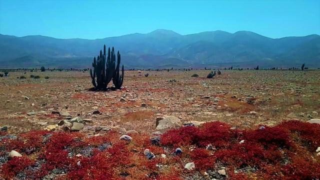 Désert de Choros - Carnet de voyage au Chili / Après la flemme