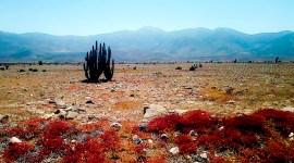 Sur les routes du Chili / road-trip vidéo