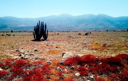 Road-trip en van au nord du Chili / Après la flemme voyage