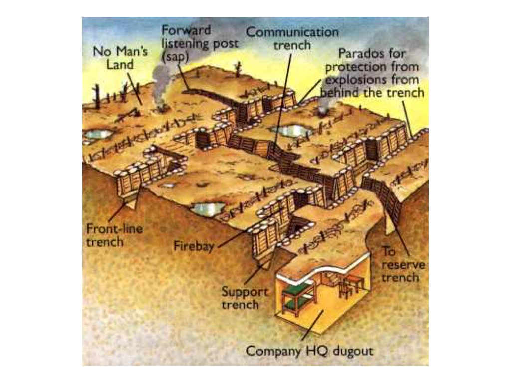 hight resolution of then look at the diagrams below use the diagrams and what you learned from the interactive to complete the interactive trench activity section in your