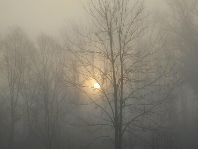 fog-448384_1280
