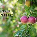 Pioneer Apples