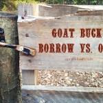 Goat Buck: Borrow vs Own