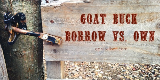 Goat Buck: Borrow vs Own