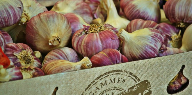 garlic-868878_1920