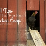4 Tips For The Perfect Chicken Coop