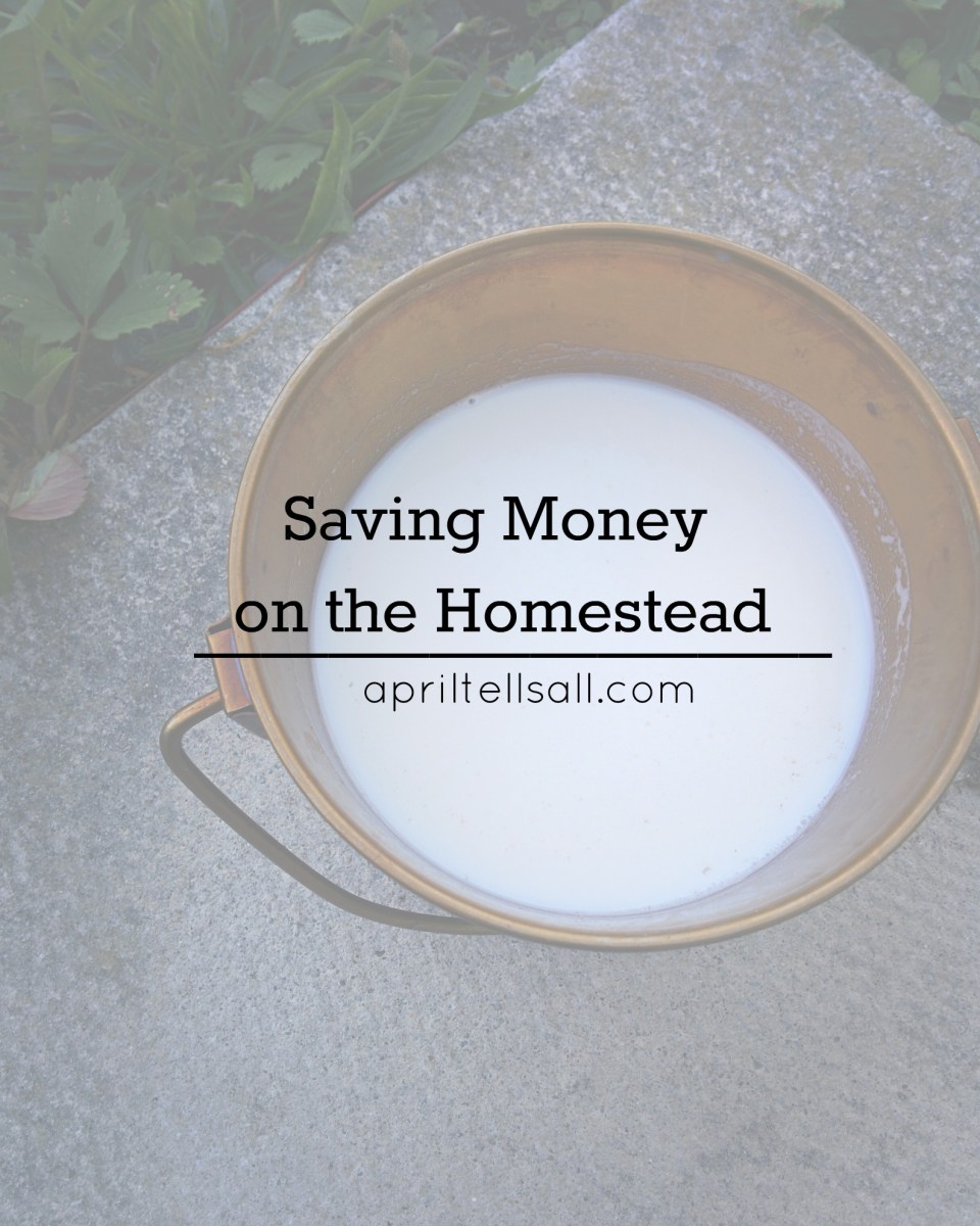 Saving Money On The Homestead